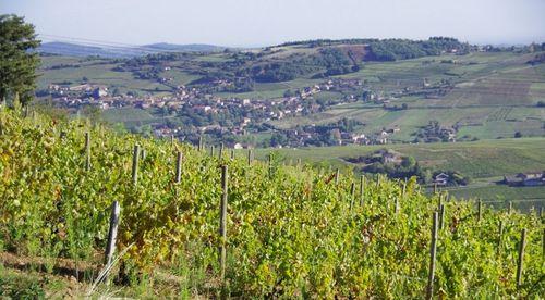 Domaine de Fa Beaujolais
