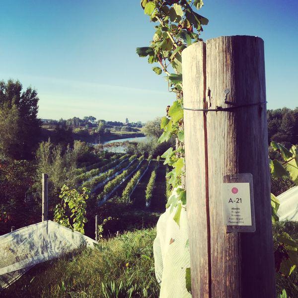 Domaine du Nival, vue des vignes d'Albariño